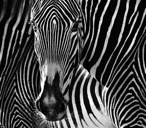 photographer  face  face  deadly animals