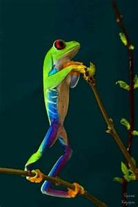 1000 images about Frogs Art & to Color on Pinterest