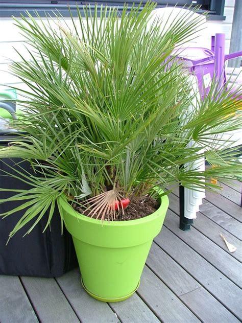 saisine directe du bureau de jugement planter palmier en pot 28 images 1 palmier en pot int