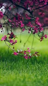 Flowers-on-grass-iphone-wallpaper