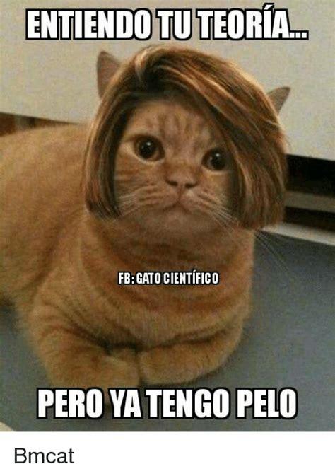 Gato Meme - entiendotuteoria fbgato cientifico pero yatengo pelo bmcat meme on sizzle