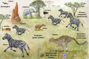 tropical grassland biome animals and plants www pixshark