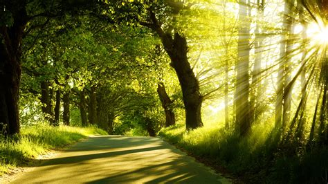 road, Nature Wallpapers HD / Desktop and Mobile Backgrounds