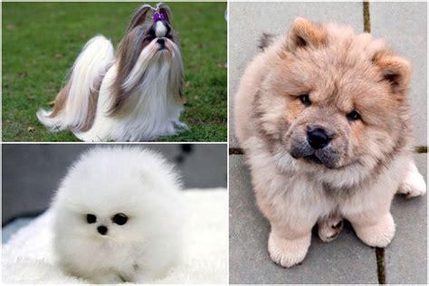 Desmit suņu šķirnes, kuras nav lētas, bet ir neticami ...