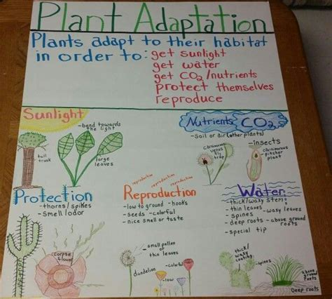 plant adaptations anchor chart google search fourth