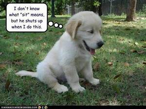 Pics For > Cute Dogs With Captions
