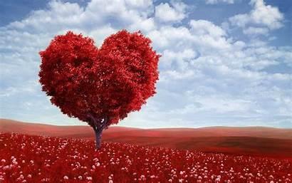 Valentine Desktop Valentines Wallpapers Beauty Pixelstalk