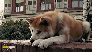Rent Hachi A Dog39s Tale 2009 Film