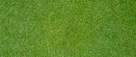 All You Need To Know About Bermudagrass