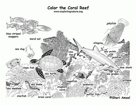 corals coloring page coloring home