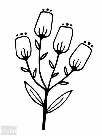 Coloring Simple Adult Flowers Pages Printable Adults