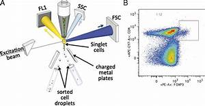 What Is The Flow Cytometry