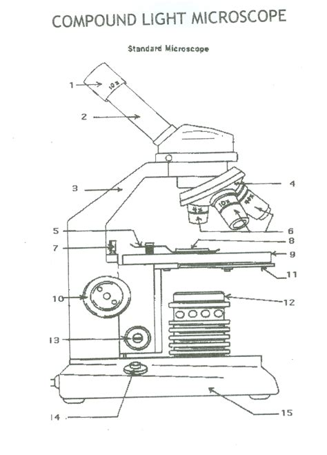 Best Microscope Diagram Ideas And Images On Bing Find What You