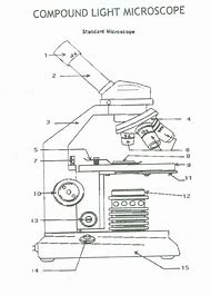 Best 25 ideas about microscope diagram find what youll love light microscope diagram worksheet ccuart Image collections