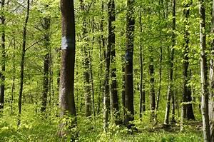 Einladung Kindergeburtstag Wald : einladung zur gedenkfeier 2016 im wald der ewigkeit naturbestattung gmbh zadrobilek ~ Markanthonyermac.com Haus und Dekorationen