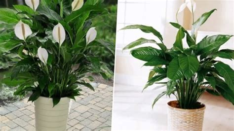 popular outdoor plants 10 popular indoor houseplants that purify air youtube