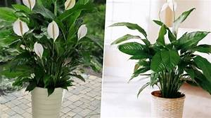 100+ [ House Plants For Low Light ] | How To Repot ...