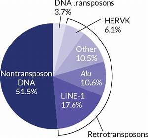 How Humans And Chimps Diverged Dna Parasite 39 Jumping