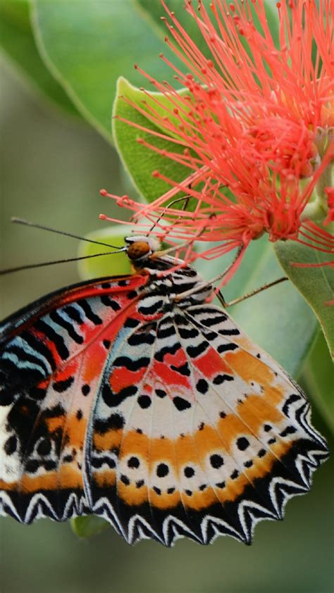 butterfly wallpapers high quality