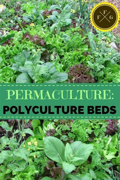 polyculture gardening examples urban gardening jardin