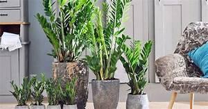 Pflegeleichte Zimmerpflanzen Mit Blüten : pflegeleichte zimmerpflanzen mein sch ner garten ~ Eleganceandgraceweddings.com Haus und Dekorationen