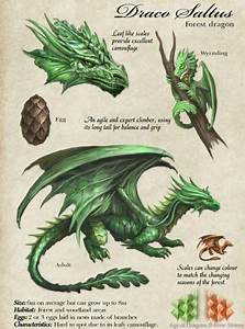 Egg Size Chart Forest Dragon Description Dragon Artwork Dragon Anatomy