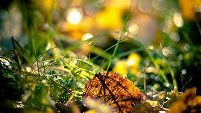 1080p Wallpapers Nature Autumn Fresh Season Wiki