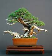 Japanese Bonsai Bonsai Enthusiast Kasokudo Bonsai Planter Inspired By The Automotive Industry Illustration Of Bonsai Tree In A Ceramic Pot Stock Photography Image Small So That It Can Be Planted In A Pot Order Now And Look Forward