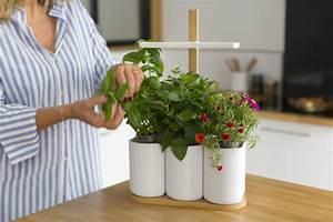 Mini Potager D Intérieur : mini jardin d int rieur pour tous vos aromes et vos fleurs ~ Dailycaller-alerts.com Idées de Décoration