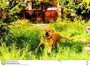 Hund Im Haus : gl cklicher hund im himmlischen dorf haus garten stockfoto ~ Lizthompson.info Haus und Dekorationen