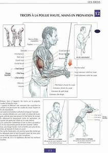 Triceps Exercices