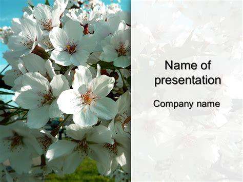 white sakura powerpoint template  impressive