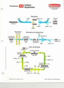 Mitochondrial Respiration Diagrams