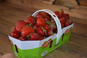Plant De Fraise : des virus s attaquent aux plants de fraises ~ Premium-room.com Idées de Décoration
