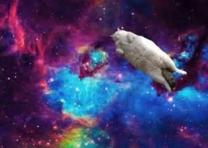 space cats spacecat geekery memes space iphone
