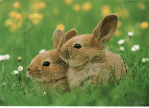 hares  grassland easter pinterest animales