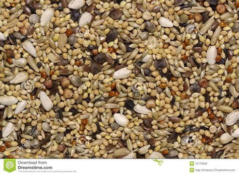 bird seeds stock image image of sunflower background