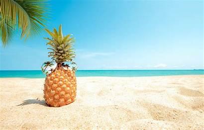 Summer Background Pineapple Beach Sand Sea Palm