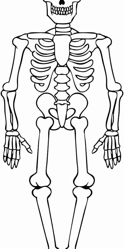 Skeleton Coloring Pages Axial Printable Getcolorings Sheet