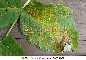 Himbeeren Krankheiten Bilder : stock fotografien von fungal krankheit himbeer rost ~ Lizthompson.info Haus und Dekorationen