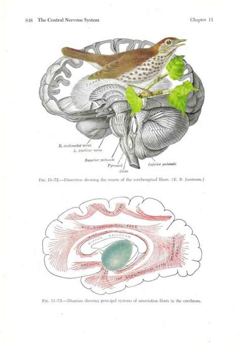 Different systems in human being. Anatomy art | Anatomy art, Anatomy for artists