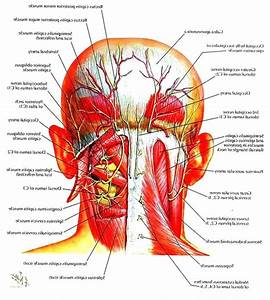 diagram: Swollen Glands In Neck Diagram