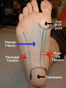 Really Nerdy Article On Foot  Anatomy And Massage