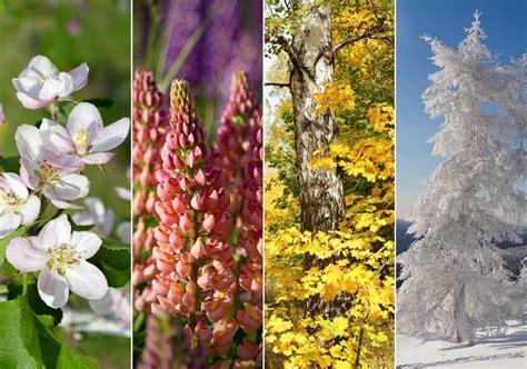 Gartenarbeit Im Frühjahr, Sommer, Herbst Und Winter Wann