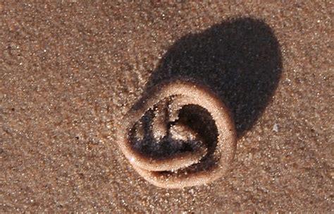 sand worm cast  findhorn beach  bob embleton