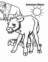 Bison Coloring Sheet Lion Standing Template Colorluna sketch template