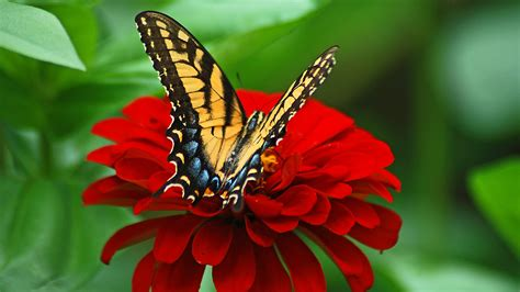 Butterfly Hd Wallpaper (68+ Images