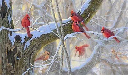 Birds Winter Cardinal Desktop Cardinals Wallpapers Bird
