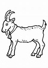 Goat Coloring Goats Printable Clipart Billy Clip Gruff Colouring Three Animal Drawing Colour Children Sheet Masks Animals Farm Kid Getdrawings sketch template