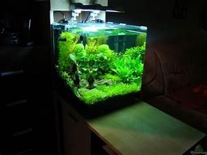 60 Liter Becken : aquarium von christoph luz nano cube 60 liter ~ Michelbontemps.com Haus und Dekorationen
